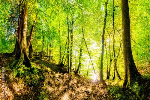 Zauberhafter Wald im Sommer am Ufer eines Sees