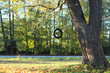 Tire swing hanging from the tree besides the railway