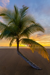 Palm tree in front of the setting sun on the beach