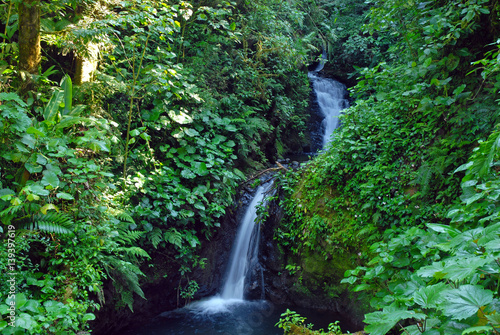 Waterfall in lush tropical rainforest in Costa Rica, where many plants grow that Poster