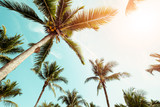 Fototapety Coconut palm tree on beach with sunlight  in summer - vintage color tone.