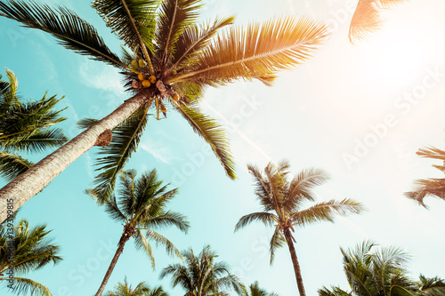 Coconut palm tree on beach with sunlight  in summer - vintage color tone.