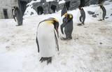 Sleeping penguins in Hokkaido, Japan