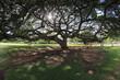 大��木�木�れ日