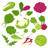 Lettuce salads leafy vegetables vector isolated icons set - 139427421