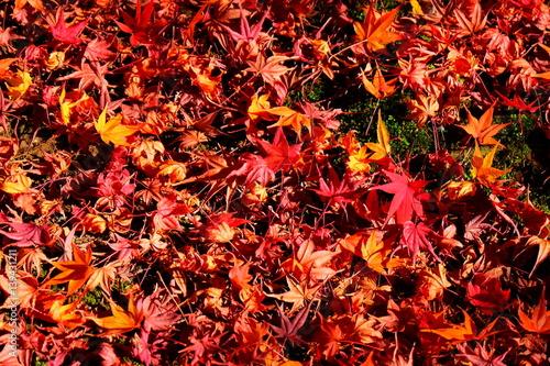 In de dag Oranje eclat 地面に落ちた落葉