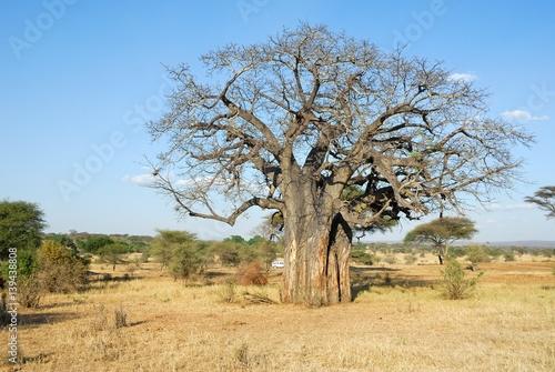 Fotobehang Baobab Big baobab, Tarangire National Park, Tanzania