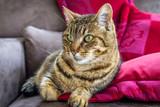 chat sur le canapé