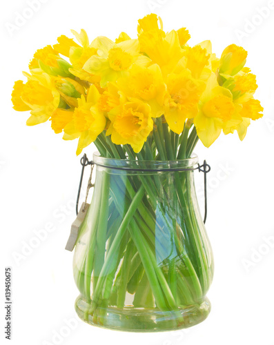 Jaskrawi żółci daffodils kwitną w szklanej wazie odizolowywającej na białym tle