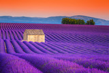Fototapety Spectacular lavender fields in Provence, Valensole, France, Europe