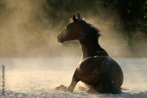 Pferd hat sich im Sand gewälzt