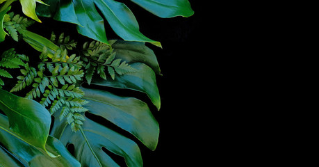 Tropical forest plants green leaves on black background, fern, monstera, and lemon lime dracaena.
