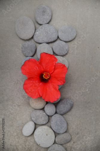 Fotobehang Spa Spa stone with red hibiscus on grey background.