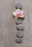 Gray stone with orchid on grey background.