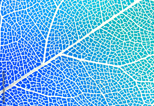 Texture of white transparent sheet on a blue and green background close-up macro. Veins and streak skeleton transparent leaf.