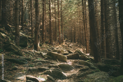 Mountain trail in the forest, roots of trees,
