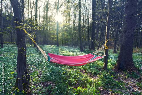 Frühling, Hängematte im Wald