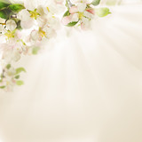 Spring Flowers on Light Background