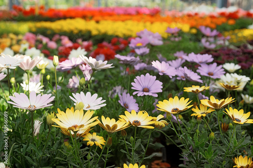 Potted Flowers in a Greenhouse
