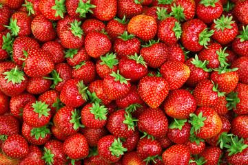 Strawberry. Fresh organic berries macro. Fruit background © Tim UR
