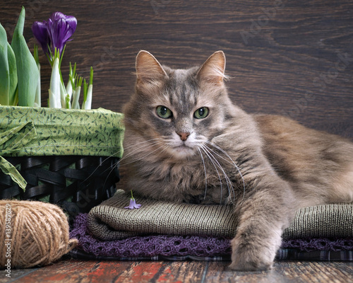 Luxurious gray cat among purple flowers