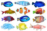 Set of aquarium fish