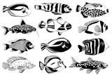 Set of aquarium fish. Black and white design