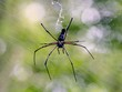 Постер, плакат: Spider is venomous animals can make