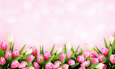 Pink tulip flowers background