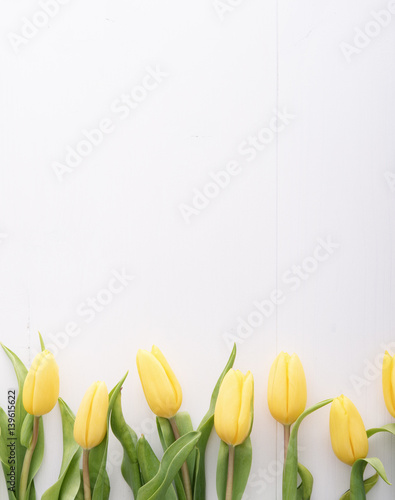 Top view on yellow tulips in a row on white table