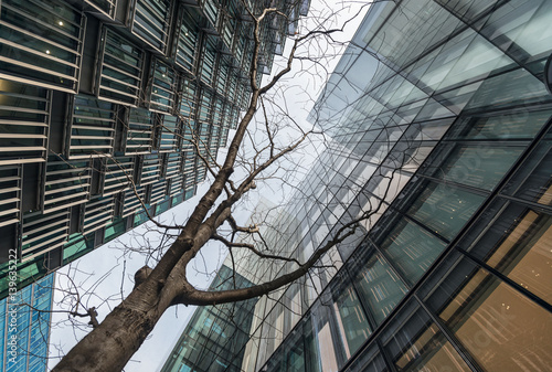 Looking up at young tree surrounded by skyscrapers