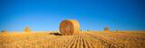Champ de blé après la fauche - 139655295