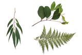 Green eucalyptus branch on white background - 139672217