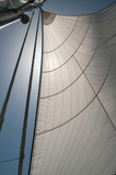 Backlit yacht or sailboat genoa or sail