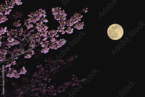 夜桜 満月 Poster