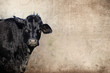 Cute black cow on farm with grunge texture background, great for agriculture or rural graphics.