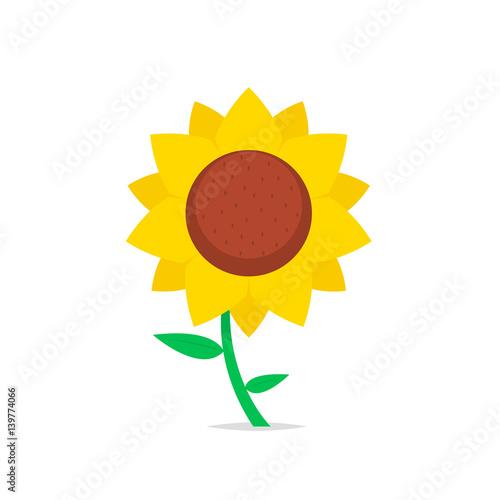 Sunflower isolated vector