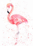 Watercolor flamingo with splash. Painting image - 139792271