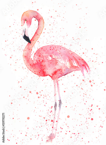 watercolor-flamingo-with-splash-painting-image