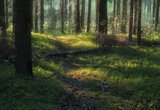 Sunlight illuminates the path in a dense forest