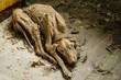 Постер, плакат: мумия собаки в Припяти