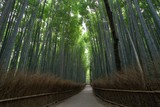 The bamboo forest in Arashiyama