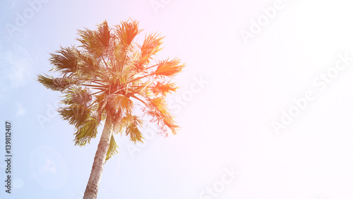 Fotobehang Purper One palm tree on blue sky background. Bottom view, sun glare, natural light and toned.