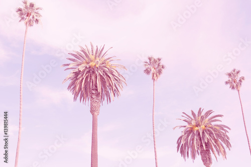 retro california palms - 139815444