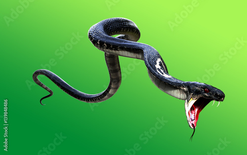3d King Cobra Black Snake The world's longest venomous snake isolated on green background, King cobra snake 3d illustration, King cobra snake 3d Rendering