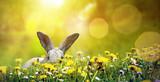 Osterhase versteckt sich auf einer sonnigen Wiese mit blühendem Löwenzahn
