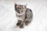 Cute tabby kitten sitting on white knitted background