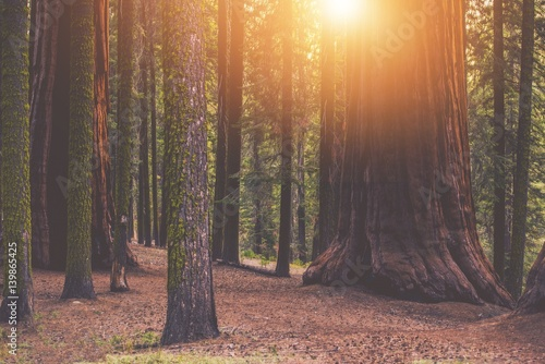 Giant Sequoia Forest Place