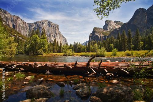 Fallen tree, Merced River, Yosemite Valley