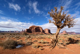 Dead Tree at Monument Valley Navajo Tribal Park